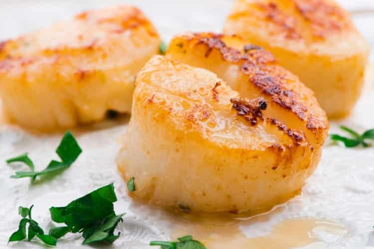 Fresh scallops on a plate