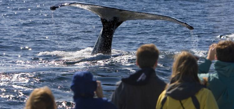 san-diego-whale-watching